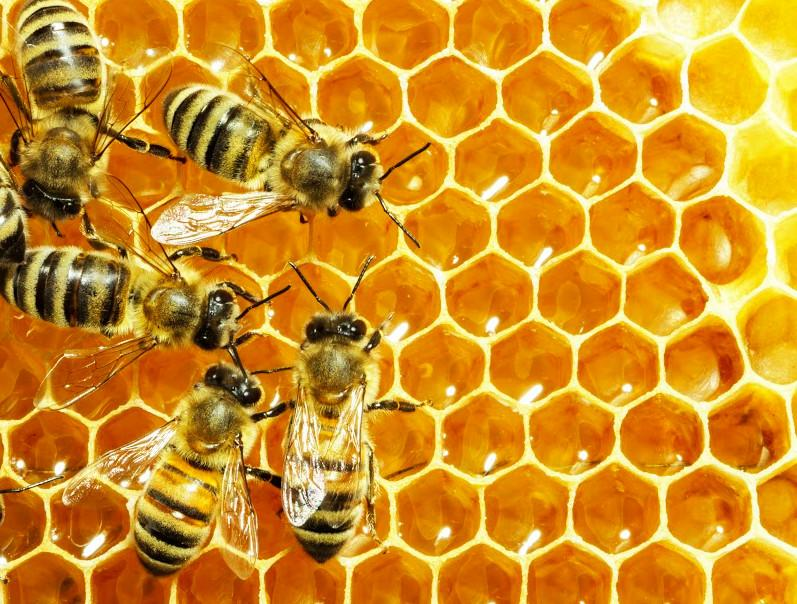 comment les abeilles fabriquent elles le miel. Black Bedroom Furniture Sets. Home Design Ideas