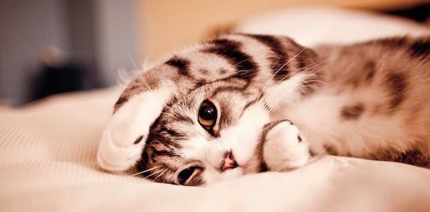 chaton qui joue sur le lit