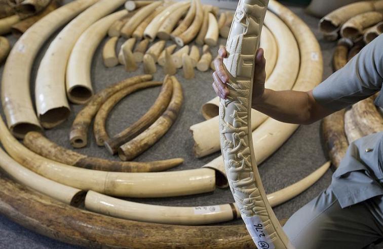 trafic de défenses d'éléphants