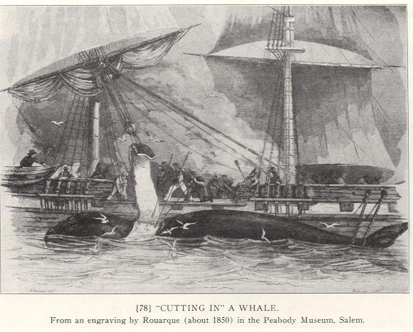 chasse à la baleine en 1850