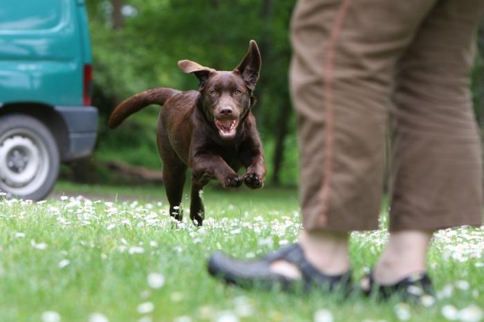 chien et exercice physique