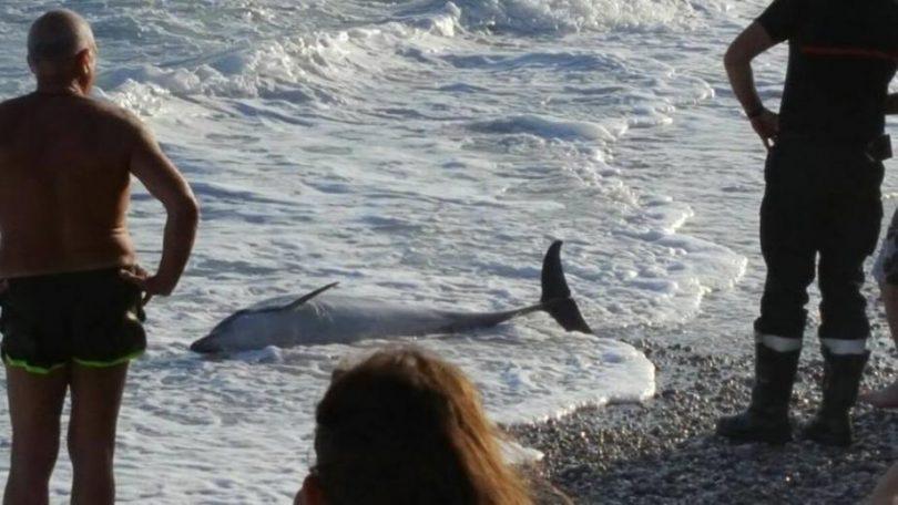 pourquoi le dauphin échoue-t-il sur la plage ?