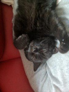 mon chat dort sur moi